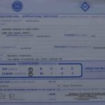 pastore tedesco certificato displasia